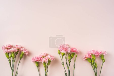 Photo for Top view bunch of carnations flowers on pink background - Royalty Free Image