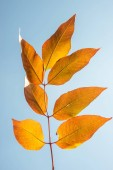 """Постер, картина, фотообои """"Красивые красные листья осенью, изолированные на плавный градиент b"""""""
