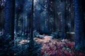 foggy evergreen forest by night