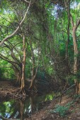 Mangrove forest in Sri Lanka