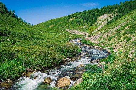 Photo pour Ruisseau de montagne dans une vallée verdoyante au milieu d'une végétation riche de hautes terres par temps ensoleillé. L'eau coule rapidement parmi la verdure vive et les arbres sous un ciel bleu clair. Incroyable paysage de montagne de la nature majestueuse Altaï . - image libre de droit