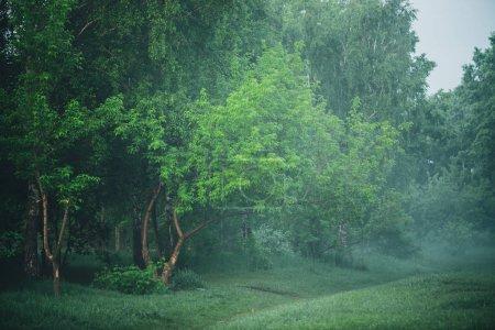 Photo pour Paysage brumeux atmosphérique avec beau feuillage vert luxuriant - image libre de droit