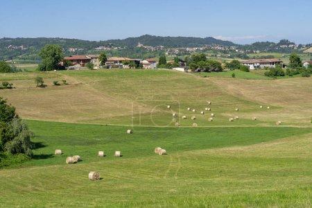 Summer landscape near Cerrina, Alessandria, Monferrato, Piedmont, Italy.