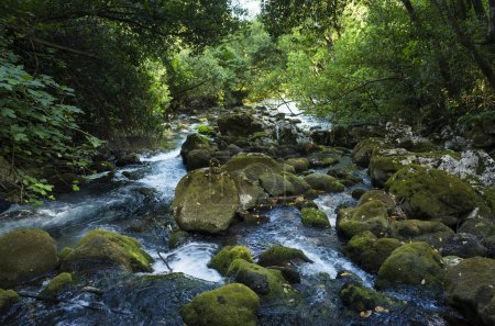 River in a forest in Croatia Europe. Beautiful landscape and nature photo. Green trees, stones and flowing water