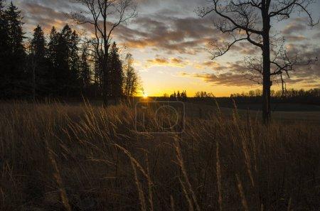 Photo pour Belle nature et paysage photo du coucher du soleil à Katrineholm en Suède. Belle image extérieure avec arbres, ciel et champ. Calme, paisible soirée de décembre . - image libre de droit