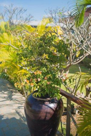 Photo pour Gros plan de plantes au Myanmar. Inle Lake. Lac - image libre de droit