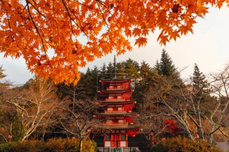 Chureito Pagoda in autumn with Fall foliage, Fujiyoshida, Japan. Japanese architecture with Natural landscape with trees