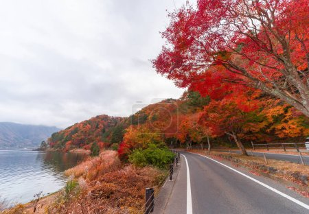 Photo for Road path with red fall foliage in autumn near Fujikawaguchiko, Yamanashi. A tree in Japan with blue sky background. - Royalty Free Image