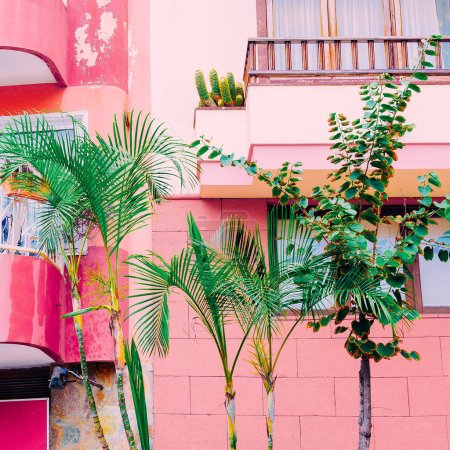 Plant on pink.  Pink mood.  Tropical green fashion
