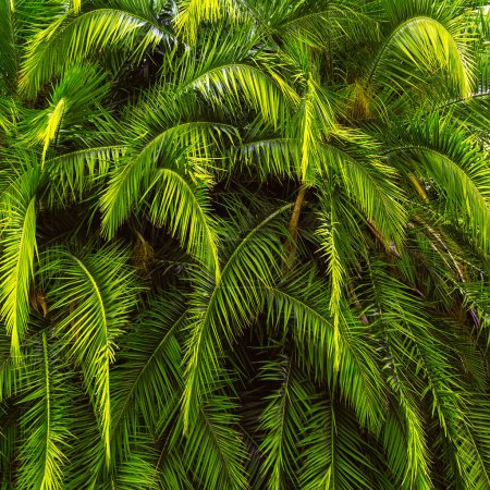 Background tropical greenery. Palms close-up Vacation vibes