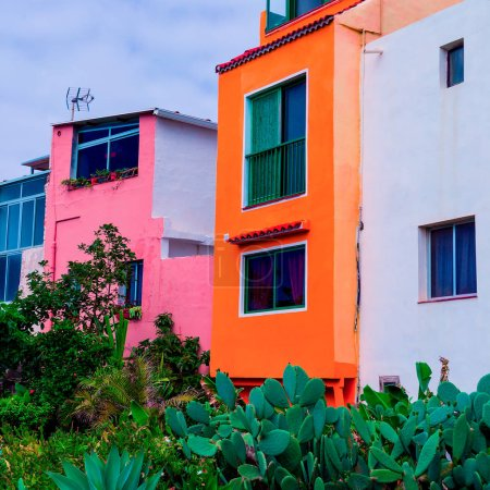 Photo pour Canaries. Jardin de cactus. Humeur tropicale minimale - image libre de droit