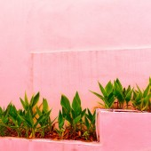 Green on pink wall background. Plants on pink concept. Fashion tropical plant