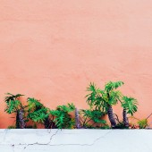 Plants on pink fashion concept. Palm on pink wall background