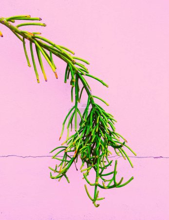 Plants on pink concept.  Tropical green Minimal art