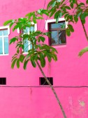 Plants on pink fashion concept. Tropical Plant on a background of pink wall