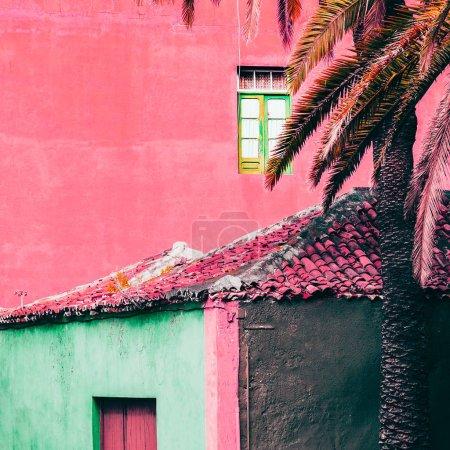 Różowy minimalne mniszek. Podróży. Wyspy Kanaryjskie