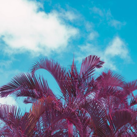 Photo for Palm. Canary island. Minimal tropical vibes - Royalty Free Image