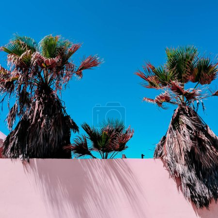 palm Canary Island Fashion minimal Travel mood