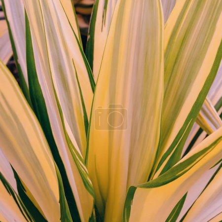 Photo pour Tropical fond vert. Concept d'amoureux des plantes - image libre de droit