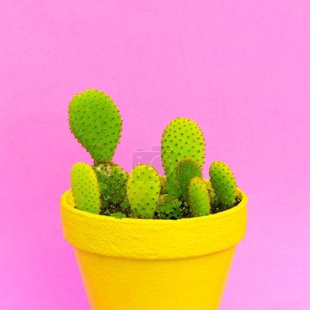 Photo pour Des cactus. Cactus amoureux mode concept coloré. Plantes sur rose - image libre de droit