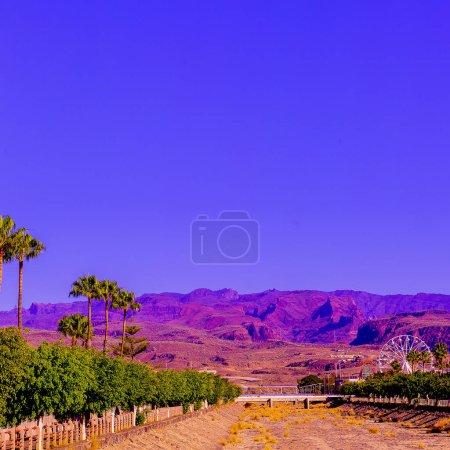 Canary Island. Landscape. Fashion travel concept