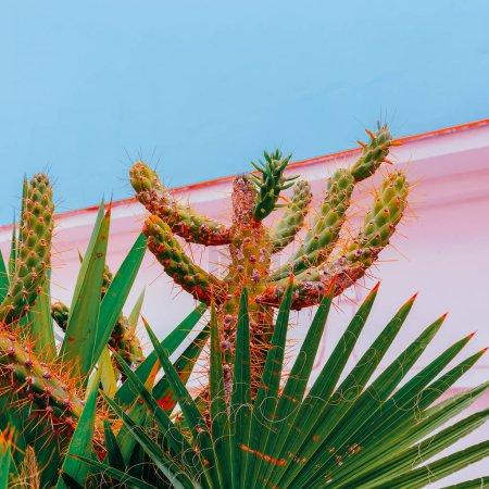 Photo pour Cactus. Amoureux de cactus art. Canary Island. Concept de voyage - image libre de droit