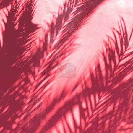 Photo for Palm shade. Minimal fashion art - Royalty Free Image
