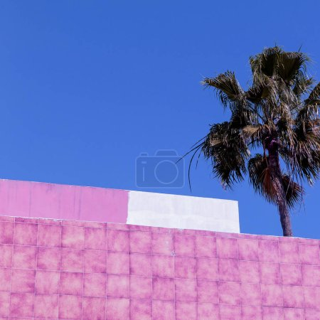 Palm. Canary island. Relax vacation concept art