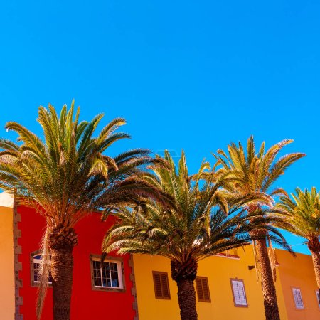 Photo for Travel concept design art. Palm. Canary island - Royalty Free Image