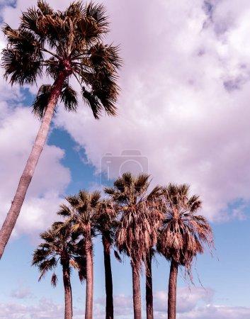 Photo pour Canaries. Voyage. Vue tropicale. Palmier - image libre de droit