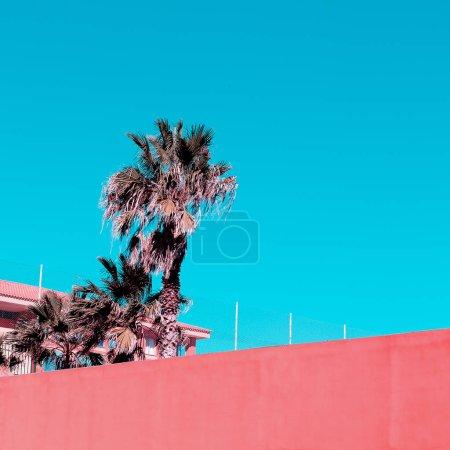 Photo pour Canaries. La paume. Couleur pastel rose tendance. Vibes de voyage de mode - image libre de droit