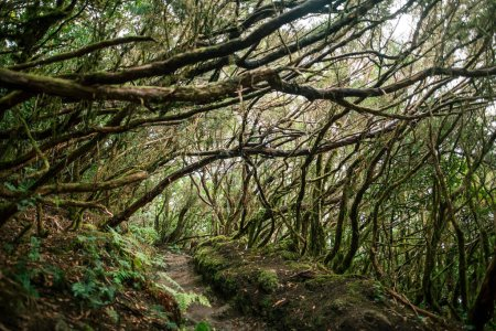 Laurel forest landscape, Anaga Country Park, Biosphere Reserve, Spain