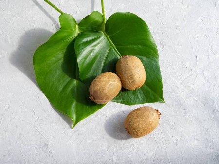 Photo pour Deux feuilles vertes de la plante de monstera et trois kiwis sur un fond en béton gris. tendance. Espace de copie. - image libre de droit