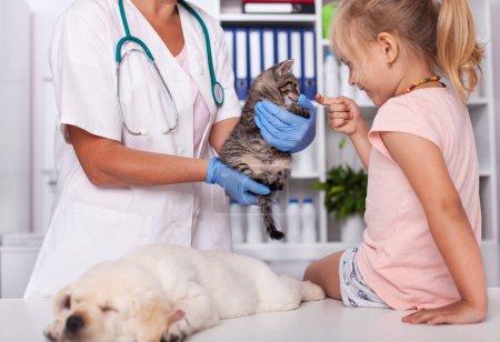 Kleines Mädchen im Tierheim oder tierärztliche Untersuchung der zur Adoption freigegebenen Tiere