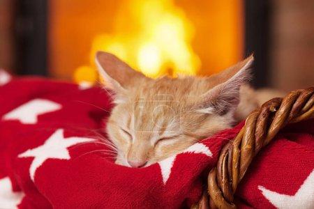 Foto de Gatito naranja durmiendo sobre una manta roja frente a la chimenea en seguridad y comodidad de una noche tranquila en casa - Imagen libre de derechos