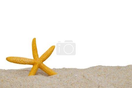 estrella de mar en la arena de la playa apartada