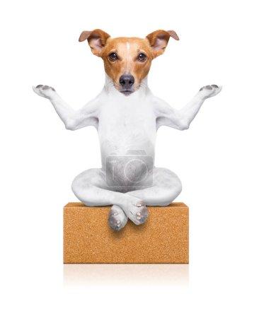 Photo pour Chien de yoga assis détendu les yeux fermés réfléchissant profondément sur une brique - image libre de droit