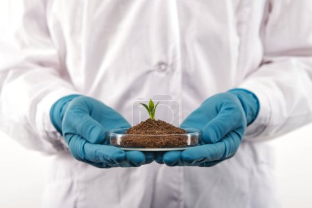 Photo for Close up of biologist hands wearing blue gloves, holding single growing sprout in test dish - Royalty Free Image