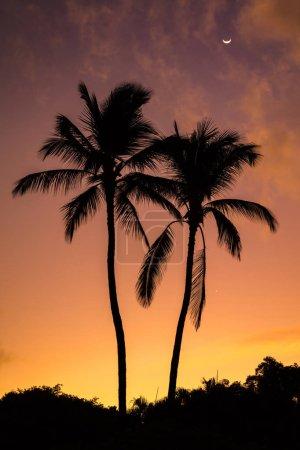Photo pour Two Palms Sunrise from Secret beach sur l'île tropicale de Maui, Hawaï. Silhouette de deux palmiers, un ciel coloré et la lune - image libre de droit