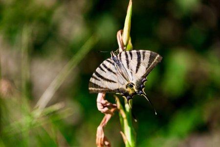 Photo pour Un papillon sur l'herbe gros plan, macro, jardin d'été, fond vert, espace de copie - image libre de droit