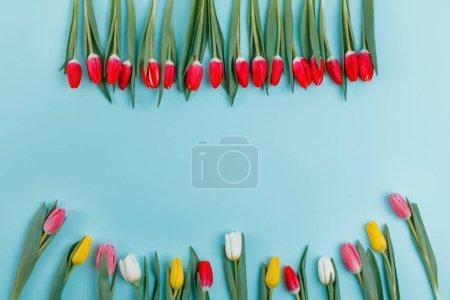 Photo pour Modèle de carte de voeux Journée de la femme. Cadre de tulipes à ressort sur fond, vue de dessus. Fête des femmes ou fête des mères ou concept de vente . - image libre de droit