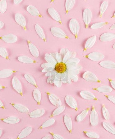 Photo pour Fond de fleurs, fleurs de marguerites blanches. - image libre de droit