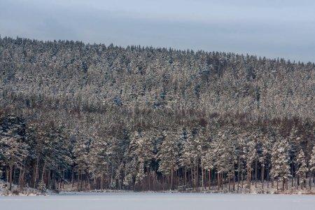 Photo pour Paysage hivernal. air frais glacé sur un lac de montagne. neige claire, pins et arbres sur le rivage montagneux. arrière-plan pour la mise en page avec espace libre - image libre de droit