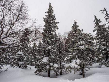 Photo pour Paysage de forêt enneigée d'hiver haut dans les montagnes. chutes de neige et mauvaise visibilité. mauvaises conditions météorologiques. écotourisme et mode de vie actif en hiver - image libre de droit