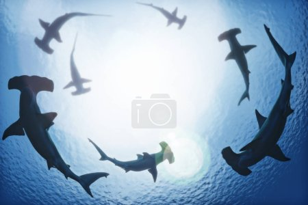 School of hammerhead sharks circling from above th...