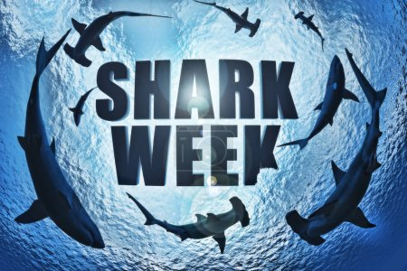 School of sharks , great white and hammerhead's ci...