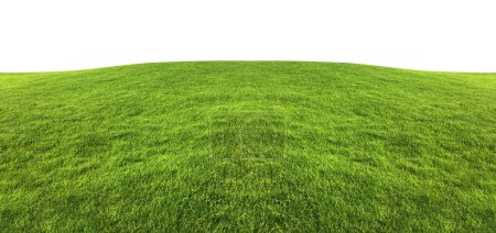 Green grass texture for background isolated on white background with clipping path.