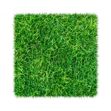 Photo for Green grass. Natural texture background. Fresh spring green grass. Isolated on white background with clipping path. - Royalty Free Image