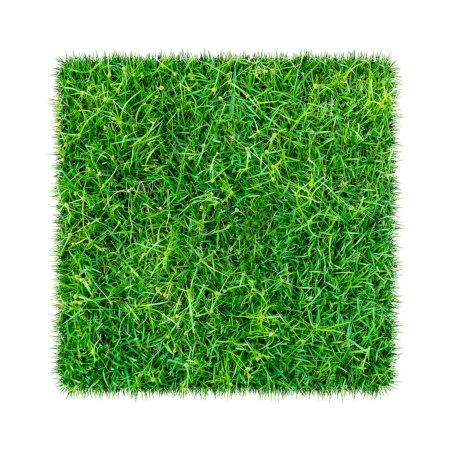 Photo pour Herbe verte. Texture naturelle fond. Herbe verte printanière fraîche. isolé sur fond blanc avec chemin de coupe . - image libre de droit