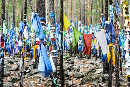 Buddhist shamanic prayer flags on ritual trees